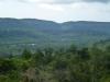 jungle-cambodja