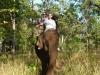 olifantje-in-de-jungle